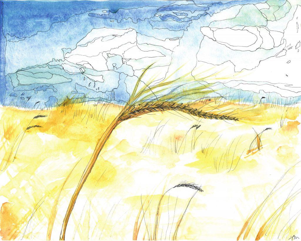 Barley Stalk
